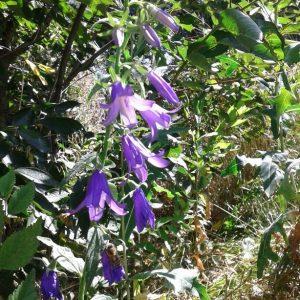 Botanic Tour in Kyrgyzstan Ala Too Travel