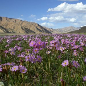 Botanic Tour in Kyrgyzstan Ala Too Travel
